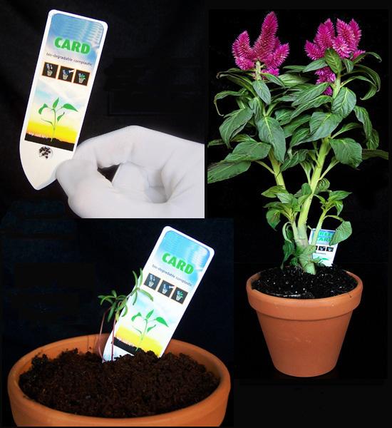 Introduce la tarjeta con semillas y añade agua. En pocas semanas florecerá