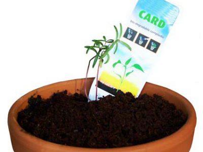 semillas para regalo promocional