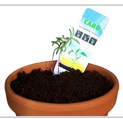 Añade agua, introduce las semillas en la tierra, y observa como crece.
