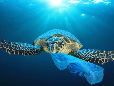 tortuga con bolsa de basura